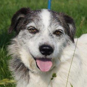 Kimy, Strassenhund, 5