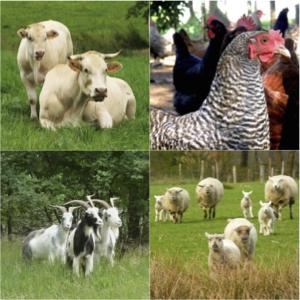 Nutztiere