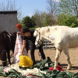Betriebsausflug zum Pferdeprofi – Bodenarbeit mit Sandra Schneider: priiiima